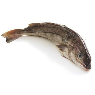 鲜冻 黑线鳕 一条 【已加工海鲜】